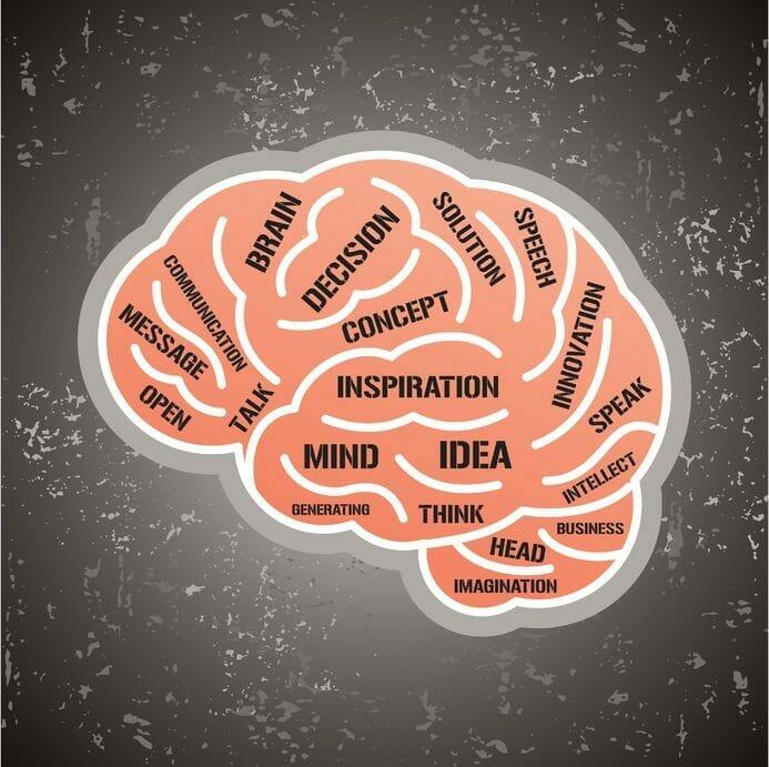What is brain favorite food?