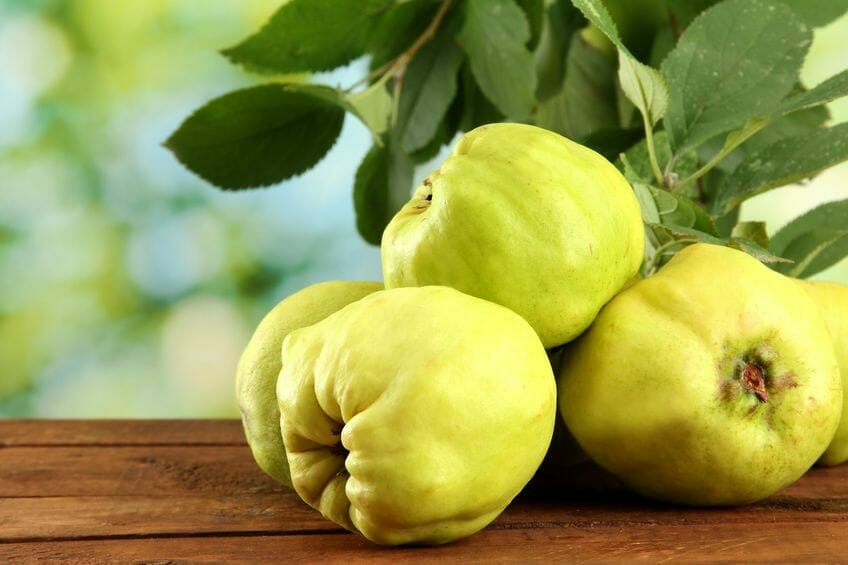 quince - powerful fruit and natural remedy