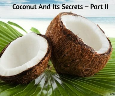 coconut and its secrets – part II