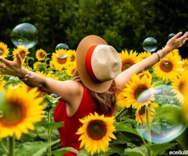 sunflower - benefits