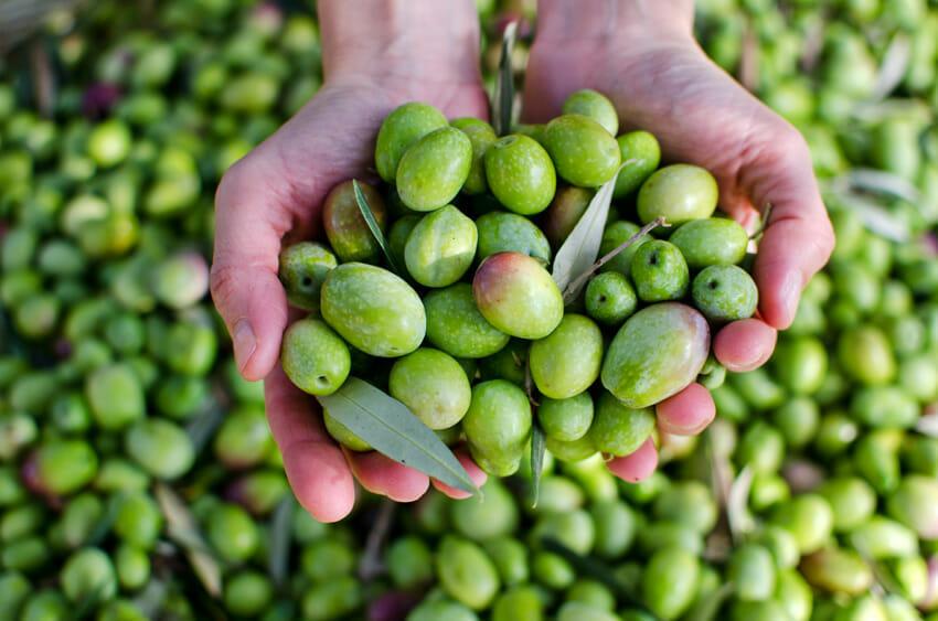 Olives for Cholesterol