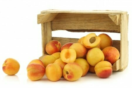 apricots storage tips