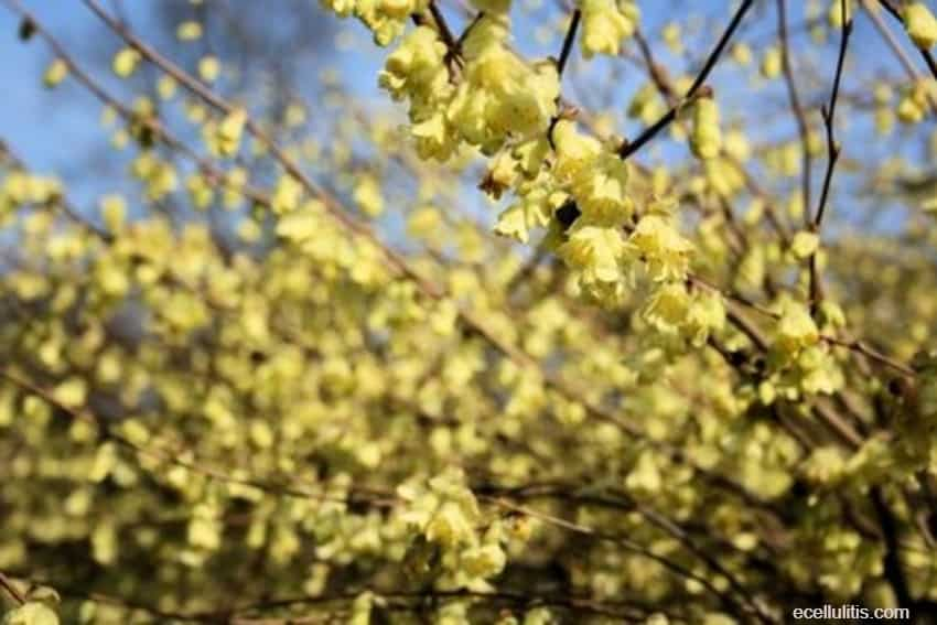 witch hazel benefits for bruises