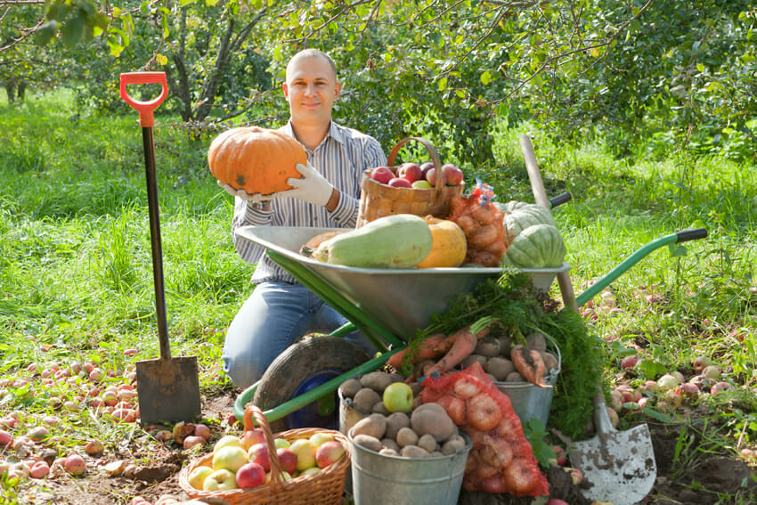 Pumpkins for prostate health – pumpkin seeds contribute to prostate cancer prevention