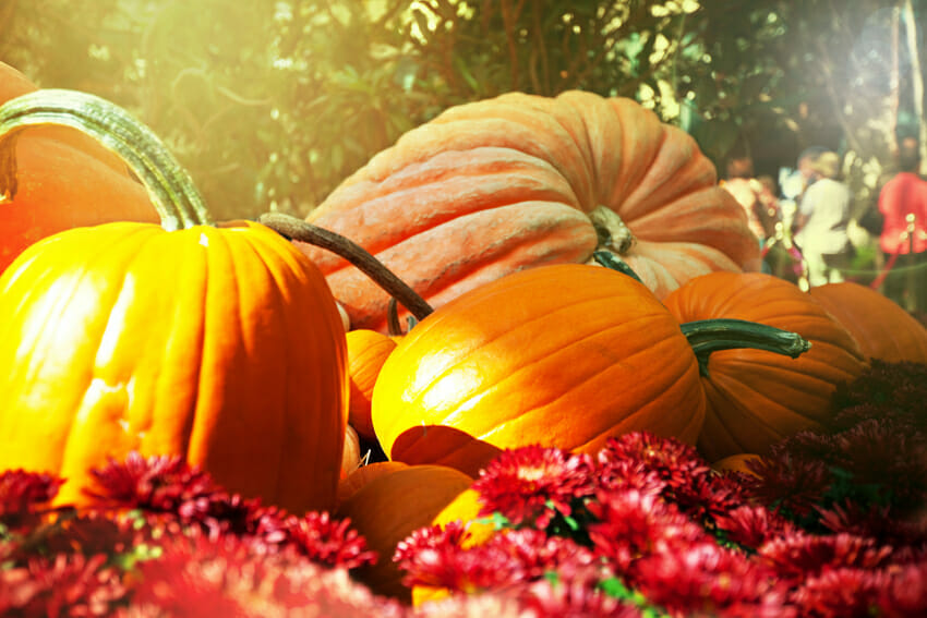 nutritional value of the pumpkins