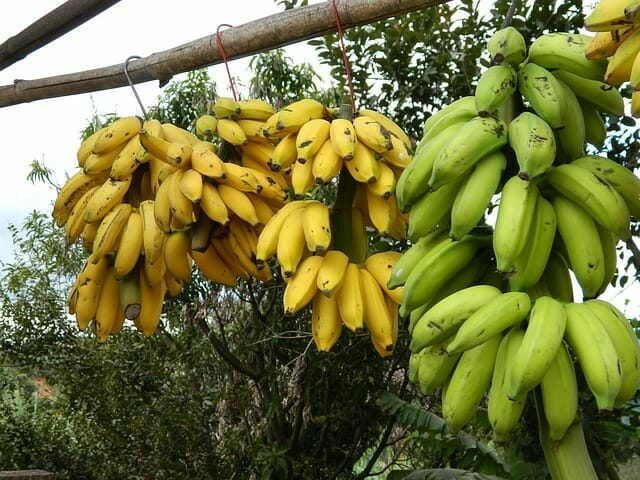 bananas for flat stomach