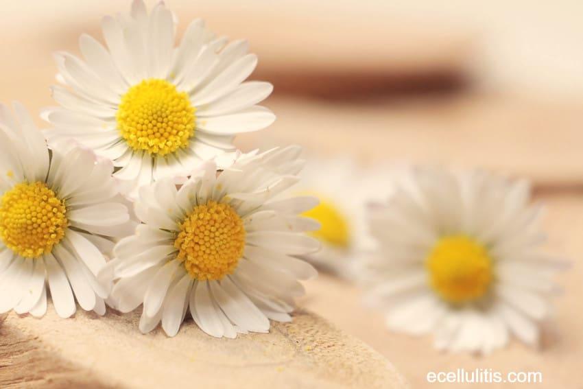 chamomile - winter skin protection