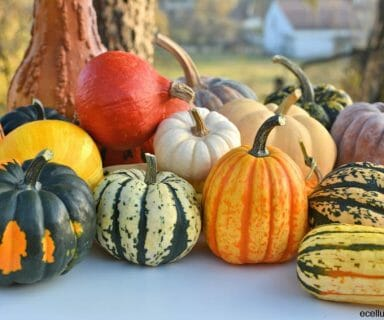 pumpkins for winter skin protection