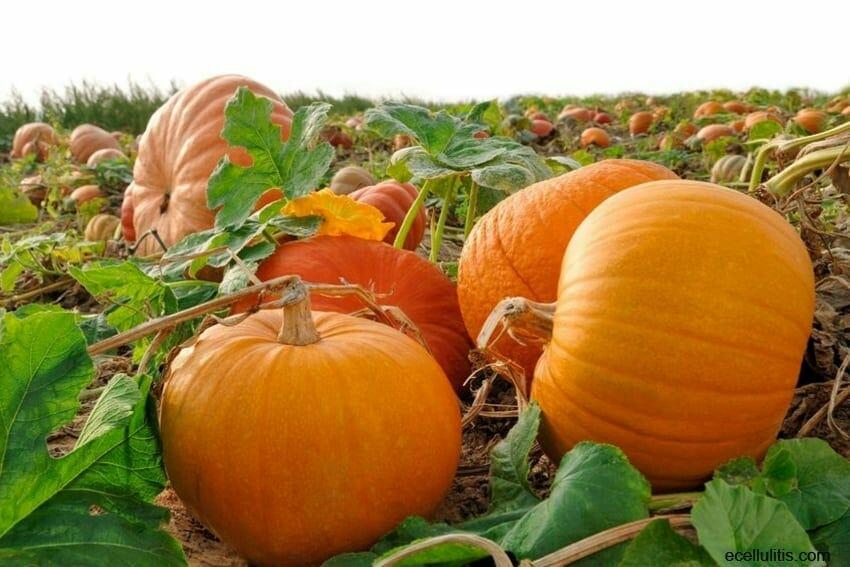 health benefits of pumpkin flesh