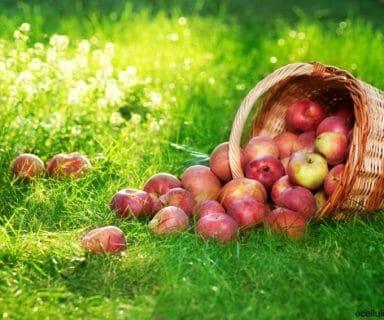 Amazing Health Benefits of Apples
