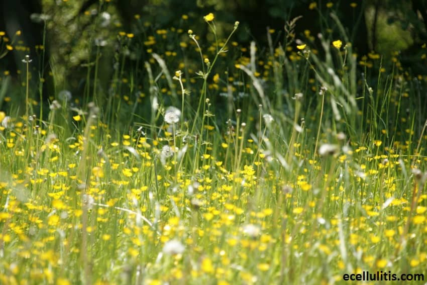 natural remedies for allergies - quick guide