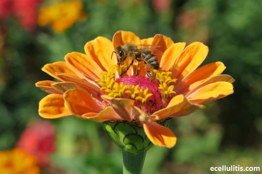 Reasons Behind Summer Allergies