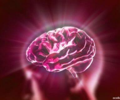 brain's favourite food