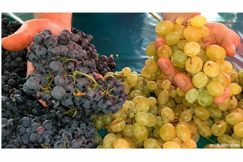 All kinds of grapes for health benefits